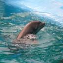 Dolphin symbol of Aphrodite
